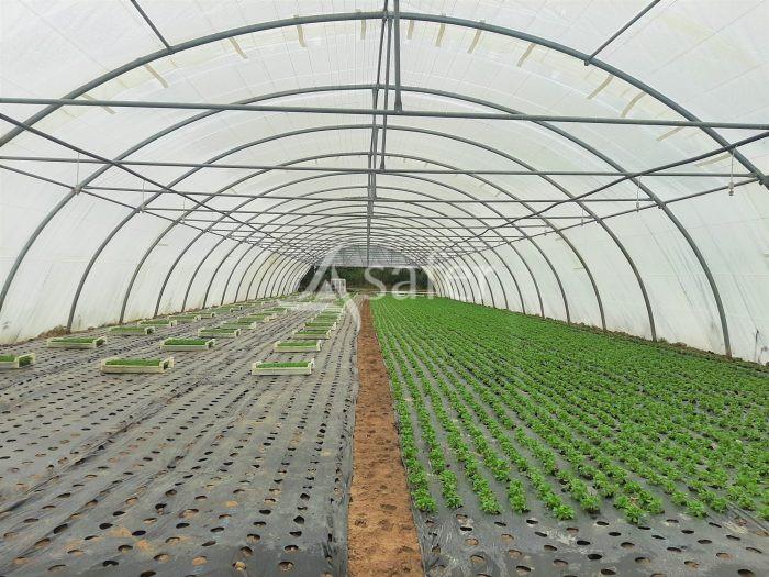vente-propriete-agricole-productions-vegetales---autres-haute-garonne-11601975253-VN19166_8_l.jpg