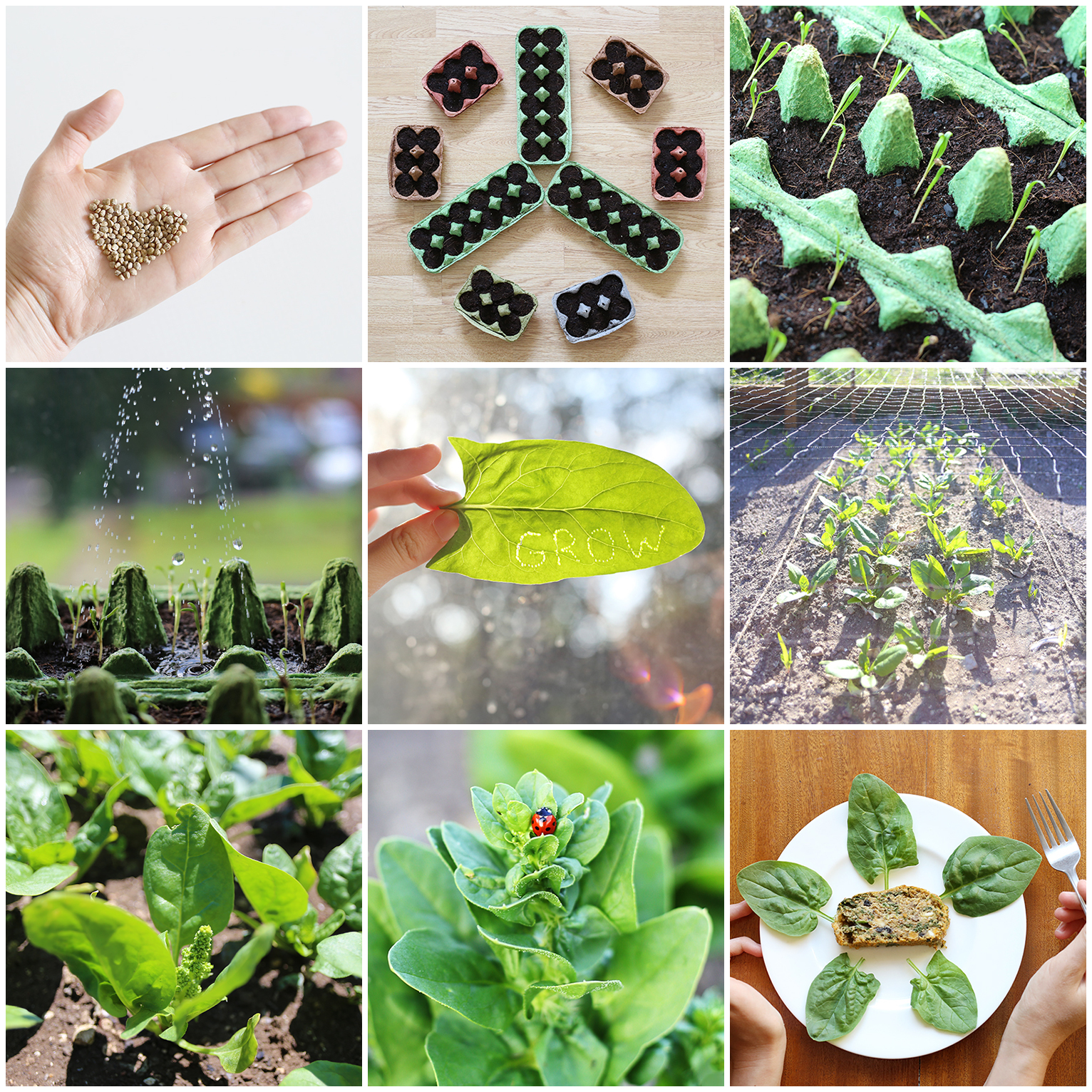 GROW_spinach_story_photo_collage.jpg